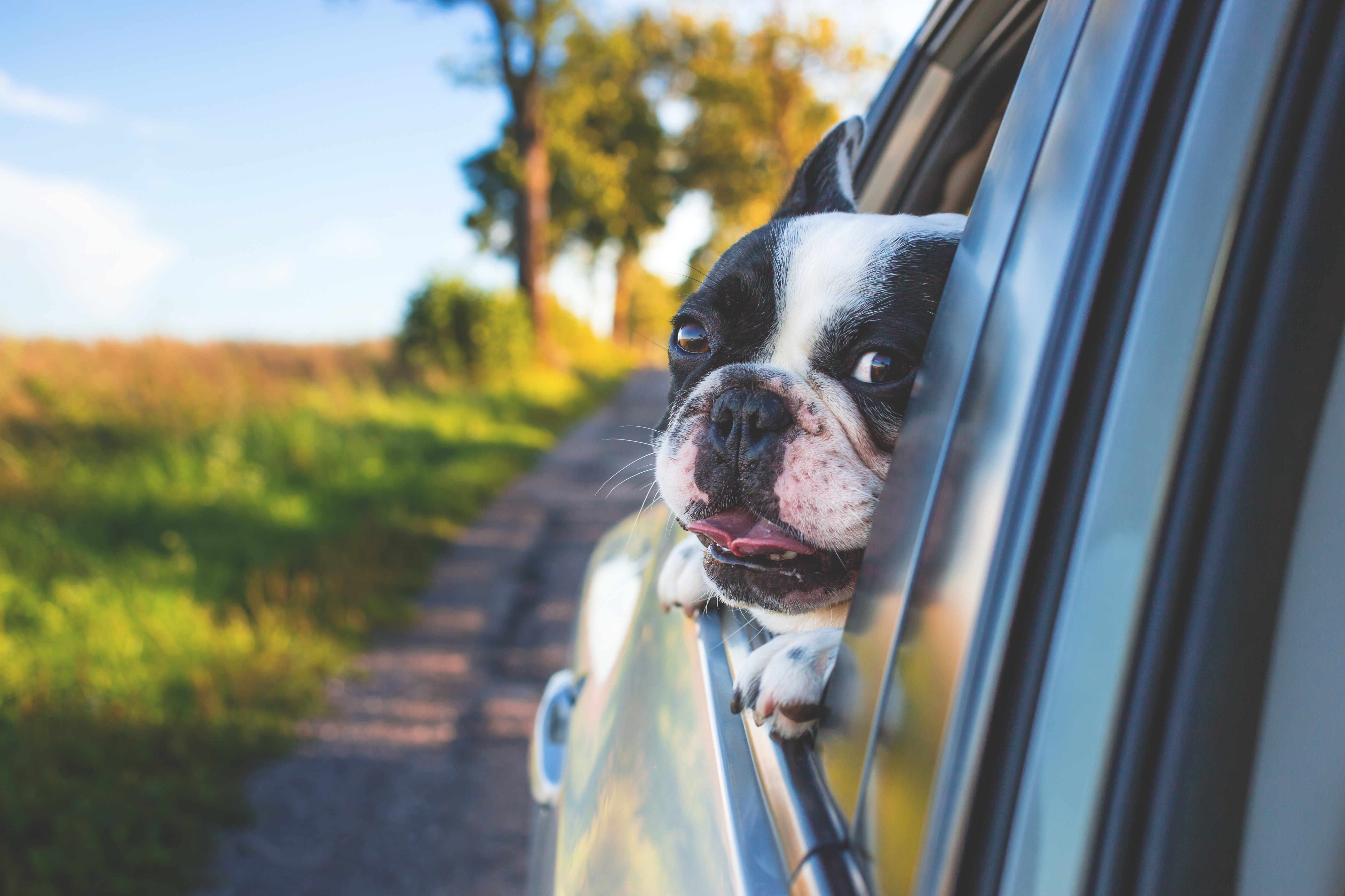 How To Clean A Car of Dog Hair